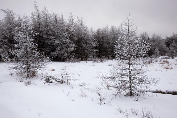 winter wmscog